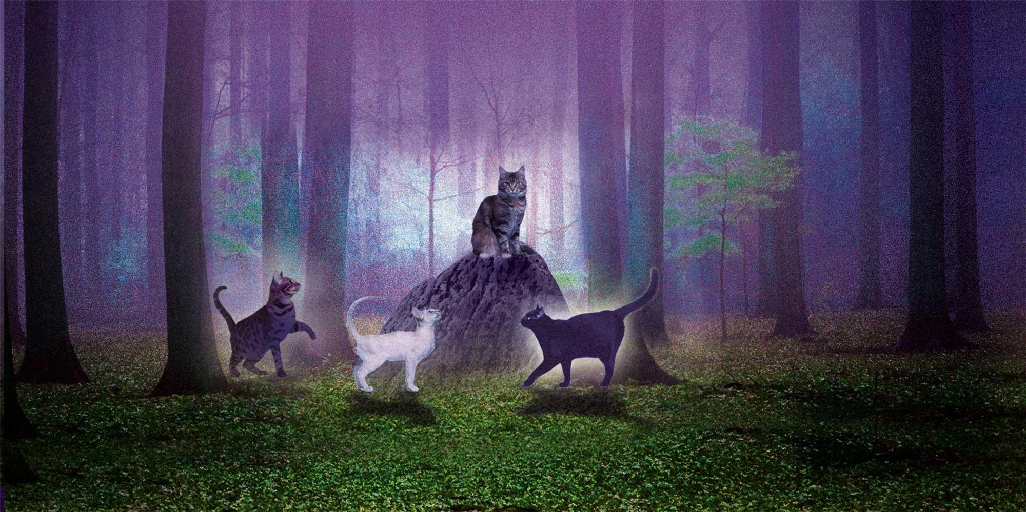 Staffel Warrior Cats