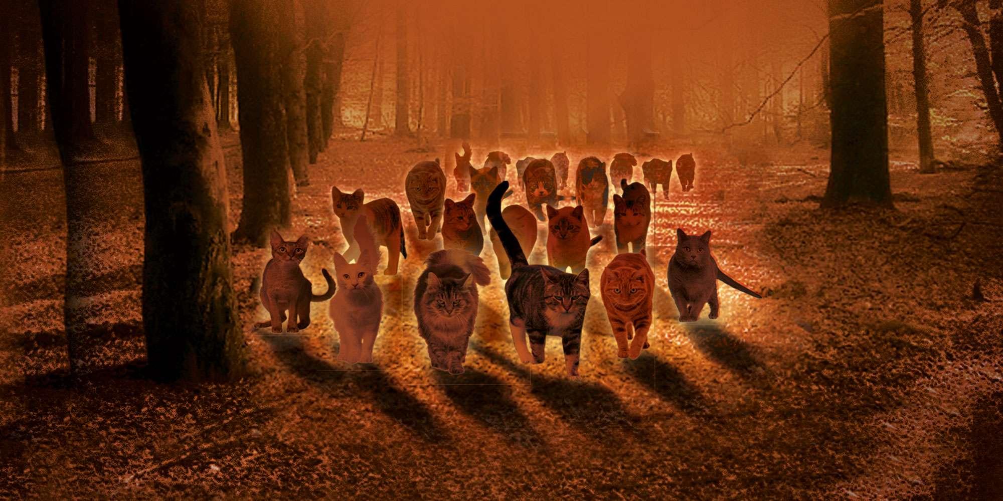 Quiz Wer Hat Es Geschnurrt Warrior Cats