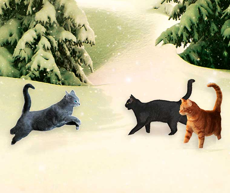 Warrior Cats Adventskalender