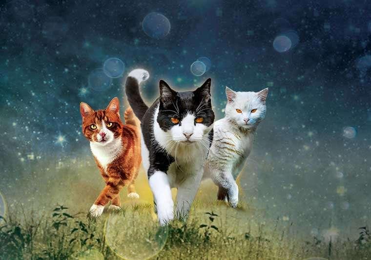 Warrior Cats Bilder Zum Ausdrucken