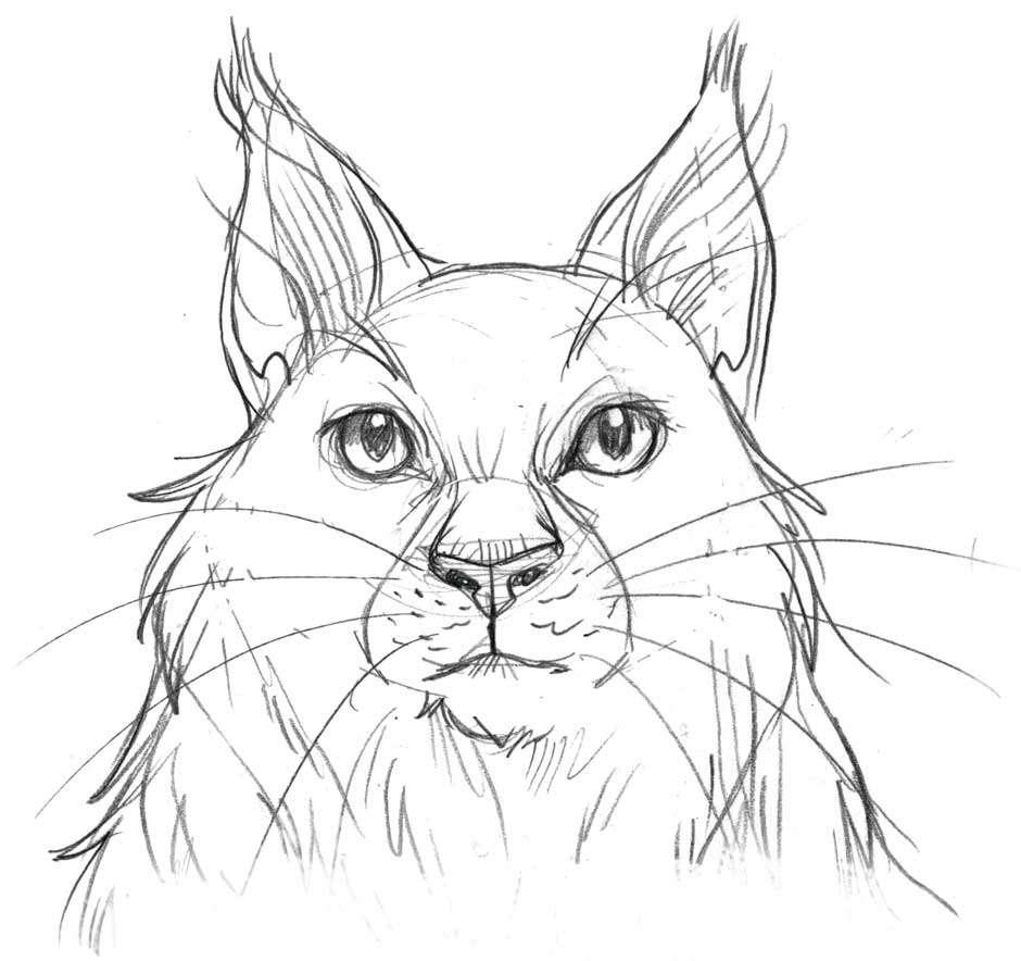 Frischbeute Katzenzeichnen Und Mehr Warrior Cats