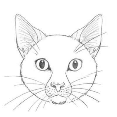 Für die Schnurrhaare setzt du zu beiden Seiten der Nase Pünktchen und zeichnest sie ein. Es können ruhig recht viele sein. Versuche, sie so fein wie möglich zu ziehen. Katzen haben auch ein paar Tasthaare über den Augen. Die solltest du nicht vergessen.