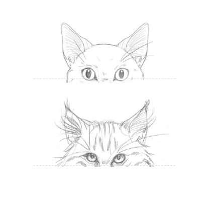 Bei Kurzhaarkatzen wachsen die Haare ungefähr bis zur Ohrenmitte. Bei Langhaarkatzen sind diese Haare viel länger. Manchen Katzen wachsen sogar ganze Büschel an den Ohrenspitzen. Experimentiere auch ein wenig mit der Position und zeichne die Ohren an verschiedenen Stellen des Kopfs.