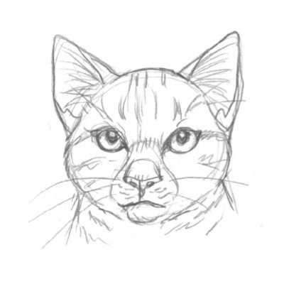 Mit der Stellung der Ohren zeigst du die Stimmung deiner Katze. Wenn sie aufmerksam ist, z.B. den Laut eines Beutetiers auffangen will, spitzt sie die Ohren und richtet sie ganz gerade nach vorne.