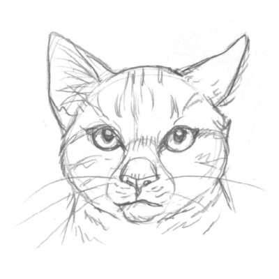 Wenn eine Katze nachdenkt, etwas nicht versteht, skeptisch oder unsicher ist, dreht sie oft ein Ohr zur Seite.