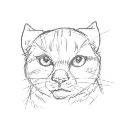 Dieses Signal versteht jeder: diese Katze ist wütend und aggressiv. Bei einem Kampf oder kurz davor sind die Ohren flach nach hinten angelegt.