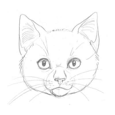 Wie bei Zweibeinerjungen ist auch bei den Katzenjungen der Kopf im Verhältnis zum Körper größer als bei den Älteren. Die Augen sind ebenfalls größer. Junge haben einen verspielten, neugierigen Blick.