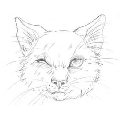 Diese Katze ist schon sehr, sehr alt. Sie ist fast blind, hat kein weiches und glänzendes Fell mehr, sondern Zotteln und Strähnen. Um ihren Kopf zu zeichnen, kannst du auf die einfache Form zurückgreifen. Ihr getrübtes Auge gelingt dir, indem du es erst richtig zeichnest und dann sanft mit dem Radiergummi verwischst. So gelingt dir der Schleier vor ihrem blinden Auge richtig gut.