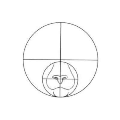 Jetzt geht es mit der Schnauze weiter. Halbiere den unteren Teil des kleinen Kreises horizontal und zeichne dort den Mund. Seine Position hängt natürlich davon ab, wo du die Nase angesetzt hast. Danach radierst du vorsichtig die Hilfslinien aus oder verdeckst sie später mit dem Fell der Clankatze.