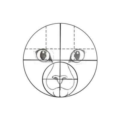 Nun ziehst du die Hilfslinien für die Ohren. Eine Linie zeichnest du horizontal oberhalb der Augen. Die beiden anderen Linien führen vertikal an der Innenseite der Pupillen entlang.